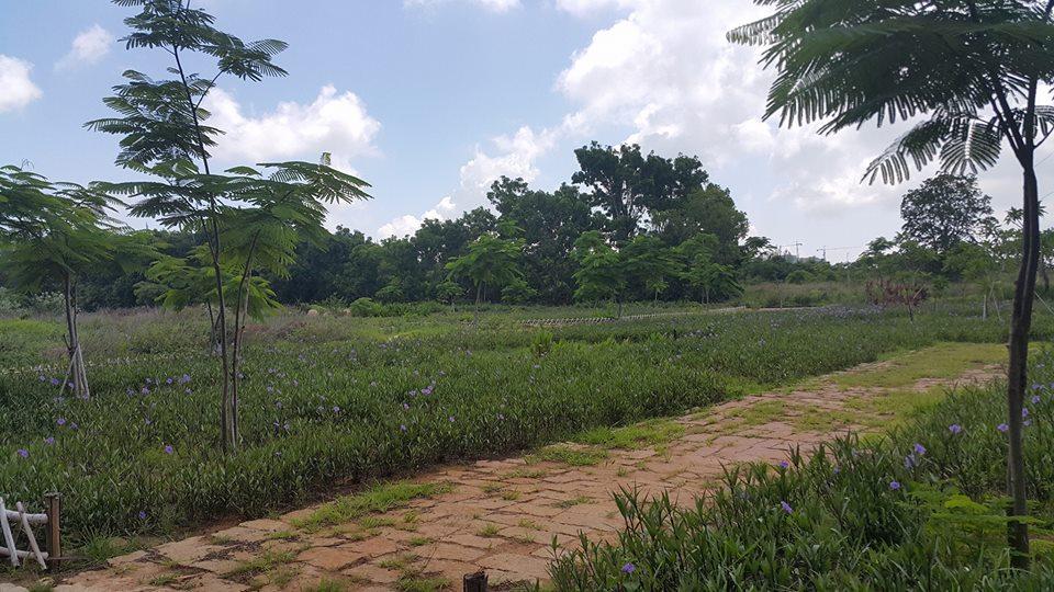 Vườn hoa cây cảnh trong khuôn viên Khu du lịch Paradise