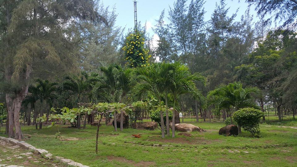 Khám phá khu cắm trại rừng dương Paradise - ảnh 3
