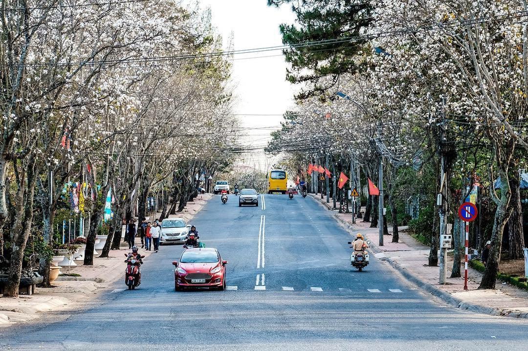 Hoa ban nở trắng các cung đường ở Đà Lạt