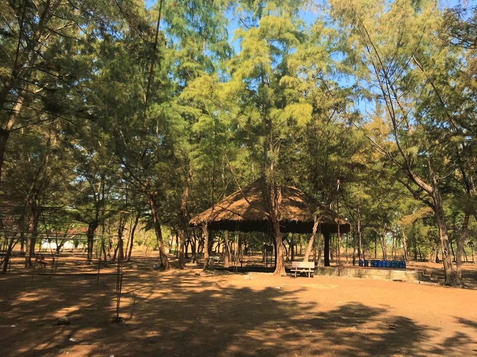 Khám phá khu cắm trại rừng dương Paradise - ảnh 2